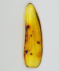 amber specimen 262